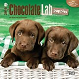 Labrador Retriever Puppies, Chocolate 2016 Mini 7x7 (Multilingual Edition) by Browntrout Publishers (2015-07-15)