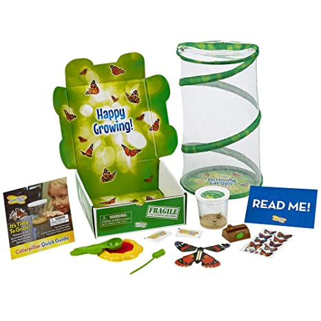 insect lore deluxe butterfly garden gift set with live cup of caterpillars habitat - Live Butterfly Garden