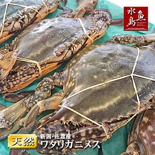 魚水島 新潟・佐渡産 天然 ワタリガニ 渡り蟹 メス 中 5杯