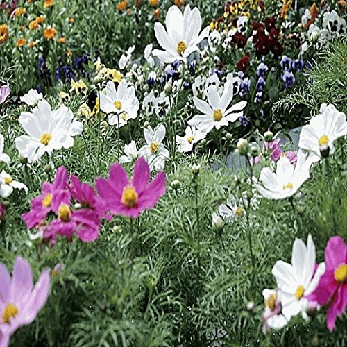 All Annual Wildflower Seed Mix - 1 Lb