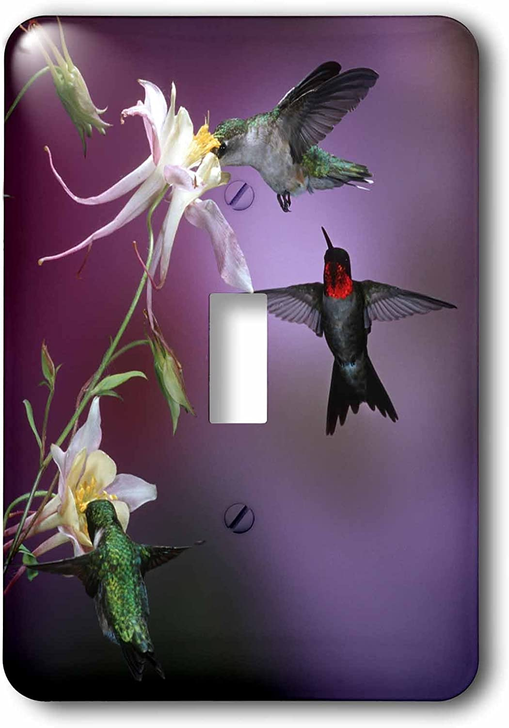3drose Lsp 250979 1 Single Toggle Switch Ruby Throated Hummingbirds Males And Female At Mckana Hybrid Columbine Amazon Com