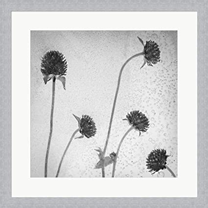 Amazon.com: Flores Secas 36-2 by Moises Levy Framed Art Print Wall ...