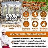 Morel Mushroom Spore Growing Kit 3 Pack – Best