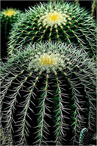 Buy Two Cactus Plants Up Close Cacti Succulents Journal Book