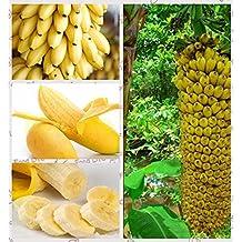 1Bag=100pcs Mini banana seeds Fruit Seeds Rare Exotic Bonsai banana Potted Gift Plant Decoration Home & Garden