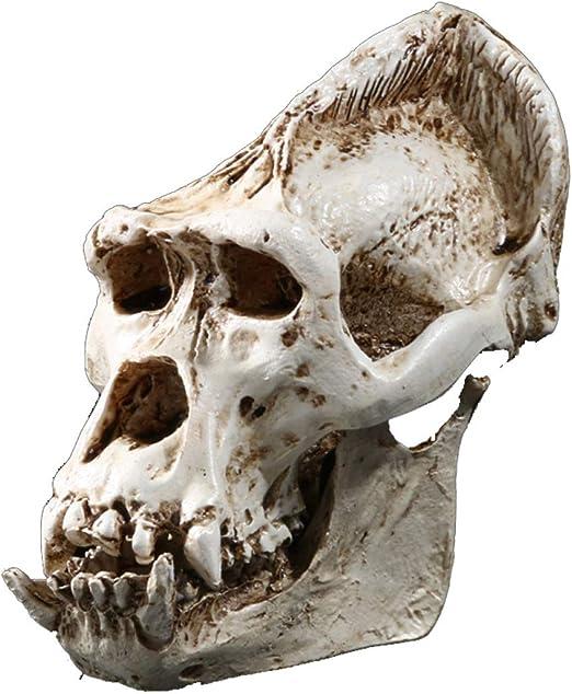 tropical home decor ideas popsugar home.htm amazon com jdshso gorilla skull statue resin craft skeleton  jdshso gorilla skull statue resin craft