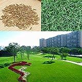 Bazaar 10000pcs Tall Fescue Grass Seeds Garden Ideal Lawn