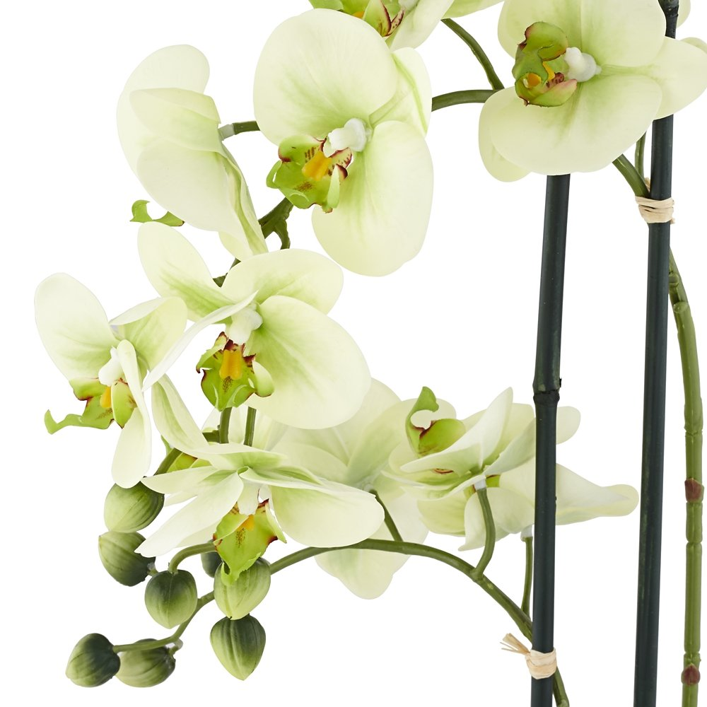 Amazon.com: Universal Lighting and Decor Light Green Phalaenopsis ...