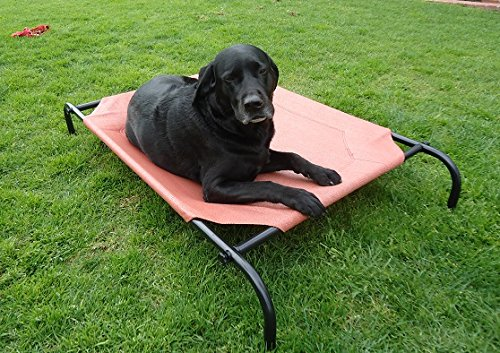 ZZZ-COT PBS4001 Steel Framed Elevated Pet Bed, Medium