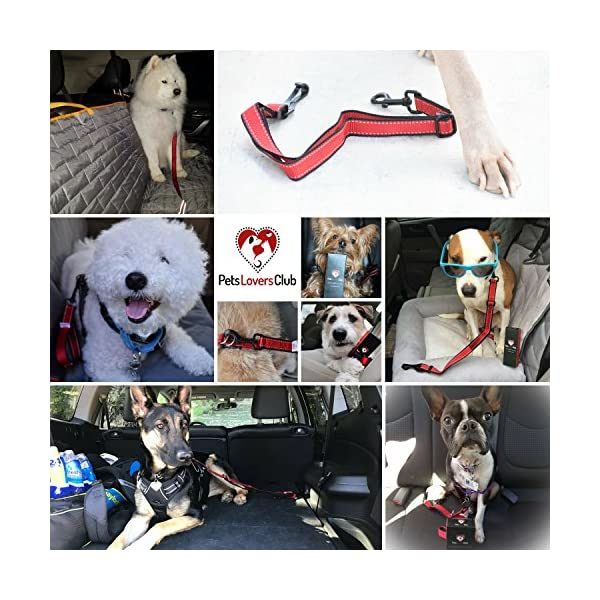 (Hook To Latch Bar, L) – PetsLovers Durable Dog Seatbelt – Heavy Duty Strap, Reflective Lines, 2 Adjustable Sizes (38cm… Click on image for further info. 7