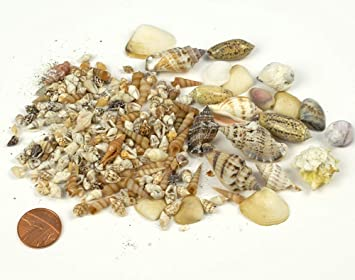 100g Assortment of Small Natural ShellsCraft Shells Beach Seaside