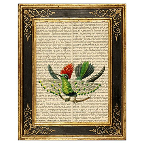 Dreamery Studio, Dot Eared Coquette Hummingbird Art Print on Upcycled Antique Book Page, 8x10.5