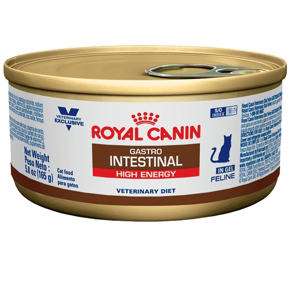 ROYAL CANIN Feline gastrointestinal (alta energía) comida de gato en lata 24/5.8 oz: Amazon.es: Productos para mascotas