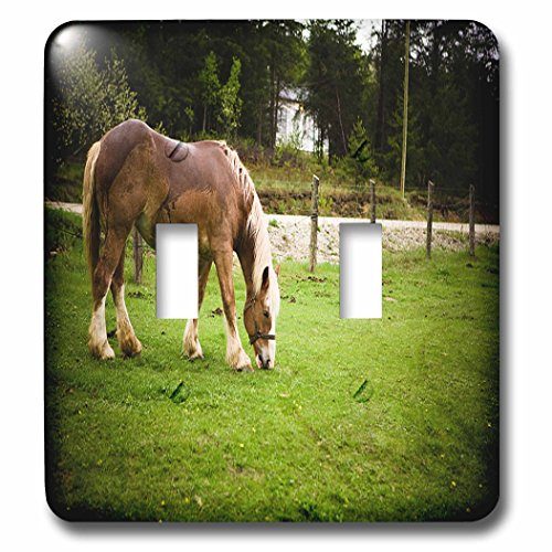 - 3dRose TDSwhite - Horse Equine Photos - Draft Horse Grazing After Bath - Light Switch Covers - double toggle switch (lsp_285476_2)