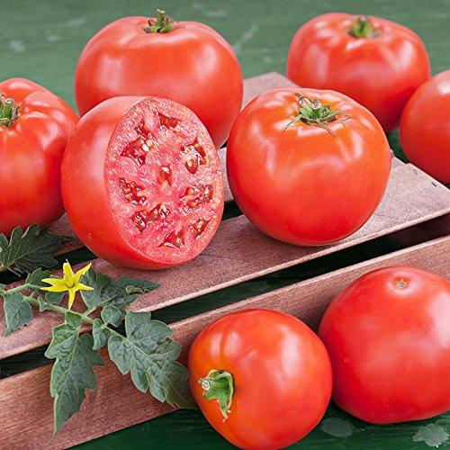 1/8 Ounce Seeds of Goliath Original Hybrid Tomato - Genus Solanum