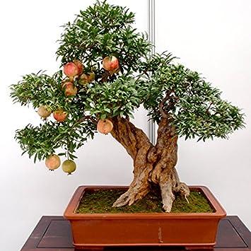 20pcs/lot, semillas de granada bonsai muy dulce semillas de frutas deliciosas, semillas