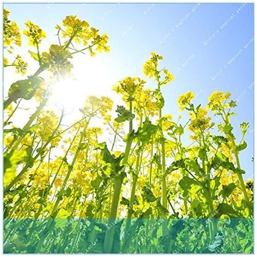 Go Garden ZLKING 200 unids Vegetal Colza Flor Comestible Aceite Vegetal Materia Prima Jardãn DIY Planta