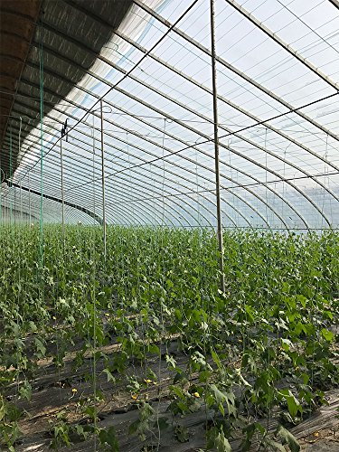 OriginA Clear Plastic Film Polyethylene Covering for Greenhouse and Grow Tunnel,6mil 16x100ft by OriginA (Image #3)
