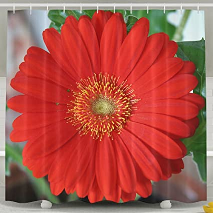 Amazon ZWHUING Red Gerber Daisy Shower Curtain Waterproof