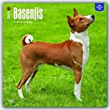 2017 Monthly Wall Calendar - Basenjis