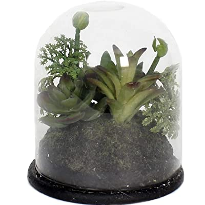 Home Mix Succulent in Glass Dome : Garden & Outdoor