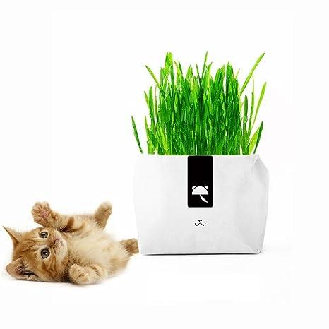 KOBWA - Kit de cultivo de hierba de trigo pequeña sin jabón para gatos, súper fácil de ...