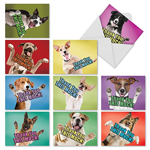 10 Assorted Thank You Cards with Envelopes 4 x 5.12 Inch - 'Dog Big Thanks' Greeting Cards for Thank You Wishes - Boxed Thank You Notecard Set M2369TYGsl (Thank You Card From Dog)