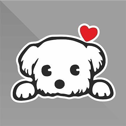Sticker Maltese Bichon maltais Bichón maltés Malteser Cane Dog Chien Perro Hund - Decal Auto Moto