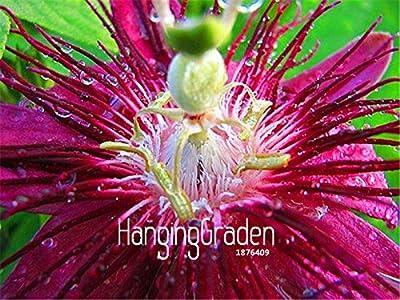 New Fresh Seeds 10 Pcs/Bag Passion Flower Seeds Vine Fruit Passiflora bonsai plant Seeds DIY home garden,#EM4O8L