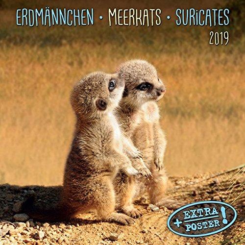 meerkats-erdmnnchen-2019-kalender-2019-artwork-edition