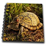 3dRose Eastern Box Turtle, Michigan - US23 AJE0005 - Adam Jones - Mini Notepad, 4 by 4-inch (db_91057_3)