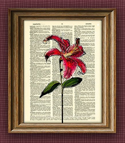 starfire-lily-flower-botanical-illustration-beautifully-upcycled-dictionary-page-book-art-print