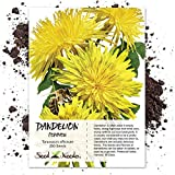 Package of 250 Seeds, Dandelion Herb (Taraxacum officinale) Non-GMO Seeds by Seed Needs