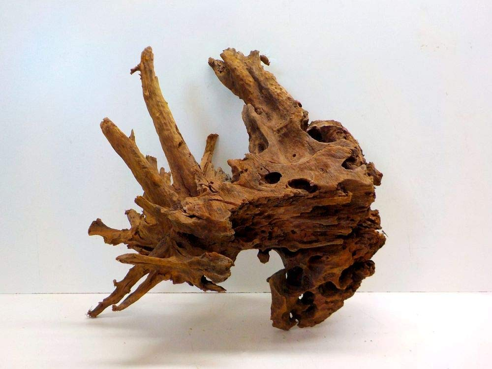 AQUARISTIKWELT24 No. 7964 XXL Mangrove Root 67 x 43 x 63 cm Aquarium Root Mangrove Wood Decoration