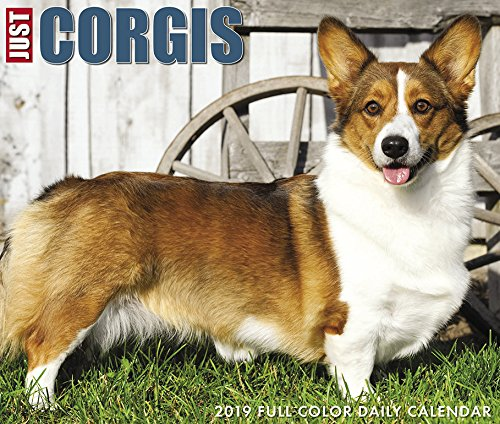 Just Corgis 2019 Box Calendar (Dog Breed Calendar) ()