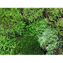 Tin Roof Treasure Live Terrarium Moss Assortment