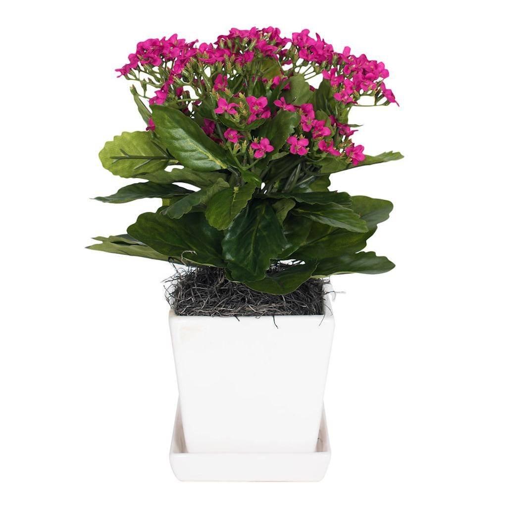 Vickerman F12232 Pink Kalanchoe Everyday Floral by Vickerman