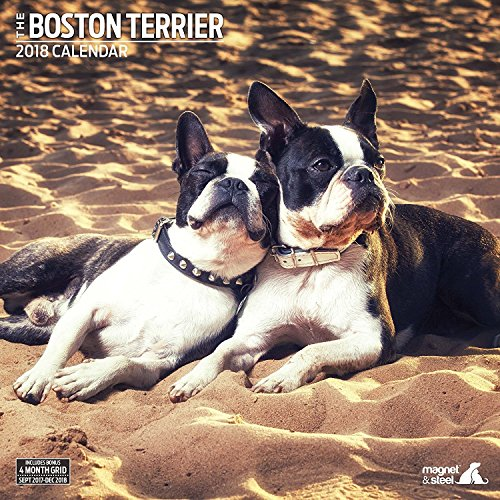 Boston Terrier 2018 Traditional Wall Calendar