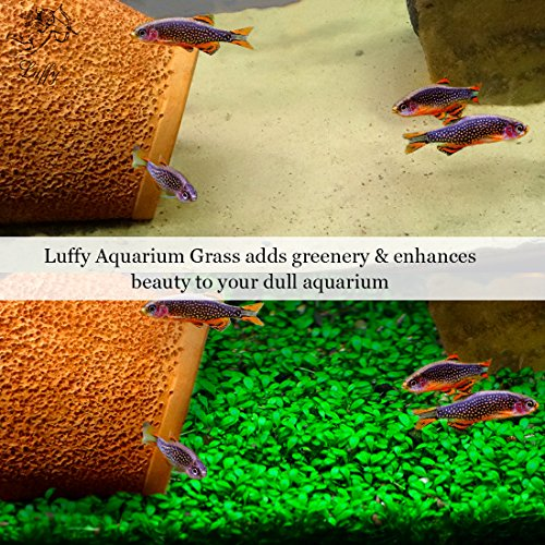 Luffy Aquarium Grass Seeds (Glossostigma Elatinoides) - 2oz Pack - Aquarium Carpet Plant - Easy to Plant & Maintain - Creates a Natural Ecosystem for Your Fish - Ideal for Beginners and Pros