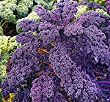 100 Pcs Purple Curly Kale Seeds,Vegetable Plant Seeds