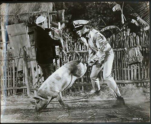 "Tony Curtis wheelbarrowing a pig Operation Petticoat 11x14"" still ..."