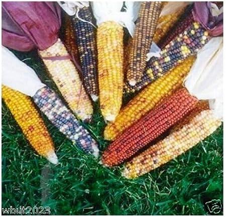100 Heirloom Strawberry Popcorn Corn Seeds 2018