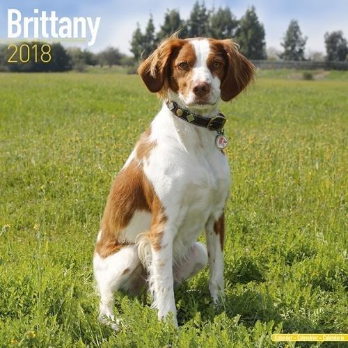 Brittany Calendar Breed Calendars Avonside product image