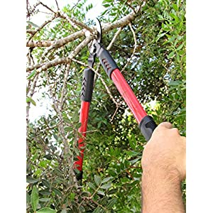 Tabor Tools GL18 20-Inch Bypass Mini Lopper, Makes Clean Professional Cuts, 1-Inch Cutting Capacity, Tree Trimmer and Branch Cutter Featuring Sturdy Medium-Sized 15-Inch Handles.