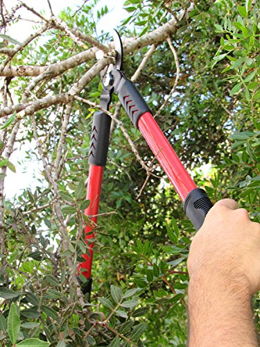TABOR TOOLS GL18 20-Inch Bypass Mini Lopper, Makes Clean Professional Cuts, 1-Inch Cutting Capacity, Tree Trimmer and Branch Cutter Featuring Sturdy Medium-Sized 15-Inch Handles. by TABOR TOOLS (Image #2)