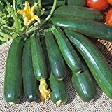 buy Kings Seeds - Courgette Zucchini - 20 Seeds now, new 2018-2017 bestseller, review and Photo, best price $1.63