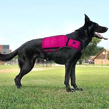 Xdog Chaleco de peso y fitness para perros - Un chaleco de perro ...