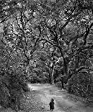 16 x 20 in. Child on Forest Road