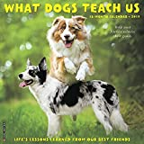 What Dogs Teach Us 2019 Wall Calendar