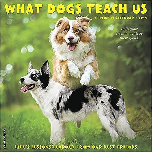 What Dogs Teach Us 2019 Wall Calendar por Willow Creek Press epub